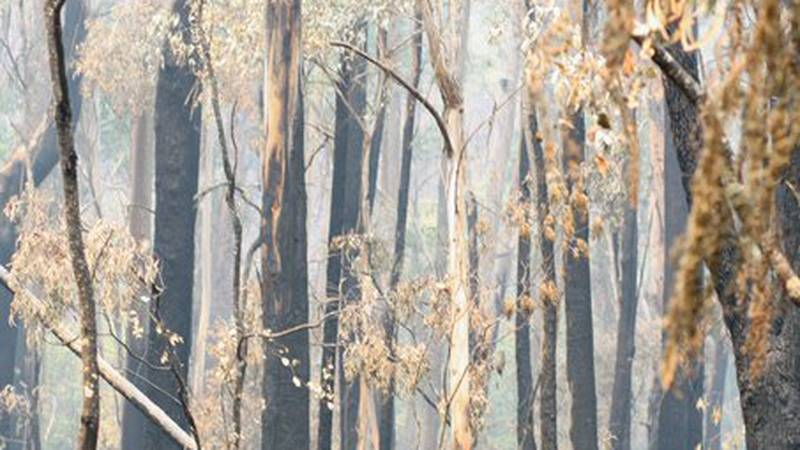 Aftermath of Budawang National Park in December following a bushfire.