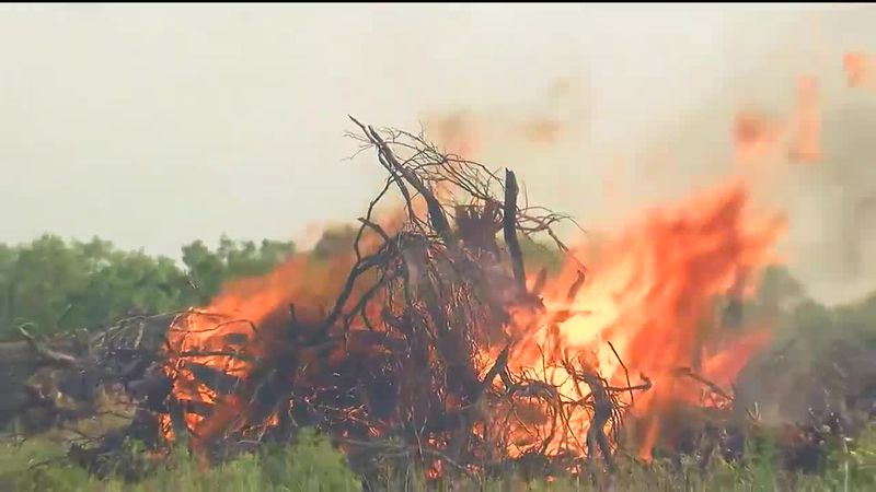 WFFD conducting prescribed burns; hopes to mitigate birds from Kickapoo Airport