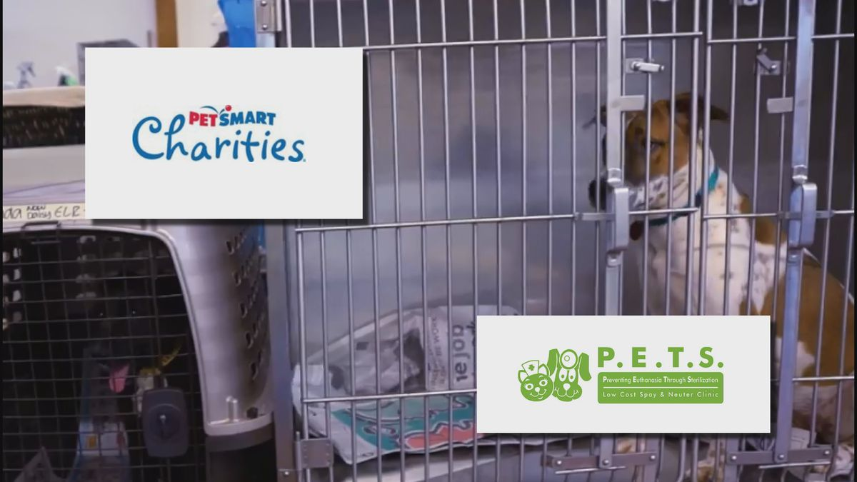 A massive donor to pet clinics across the country has generously granted a quarter of a million...