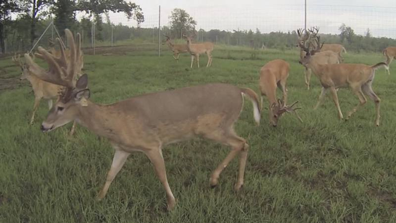 More deer will be on the roads during October through December because it is mating season.