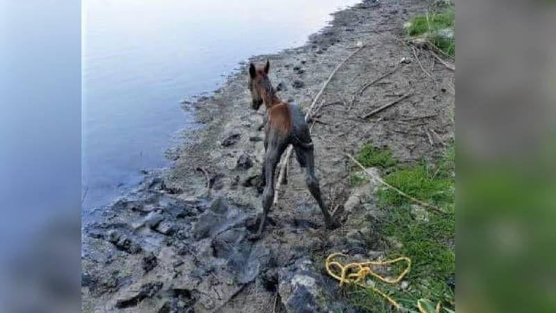 Agents rescue horse from mud