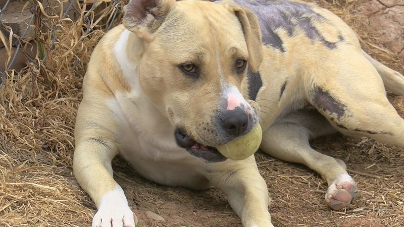 Emily's Legacy Rescue is still working to find homes for animals in need.