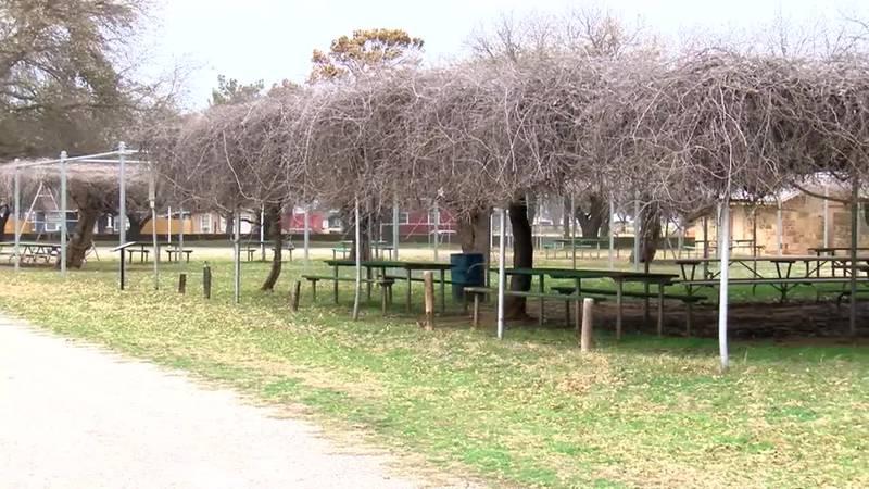 Grape Arbor at Fort Belknap, Texas