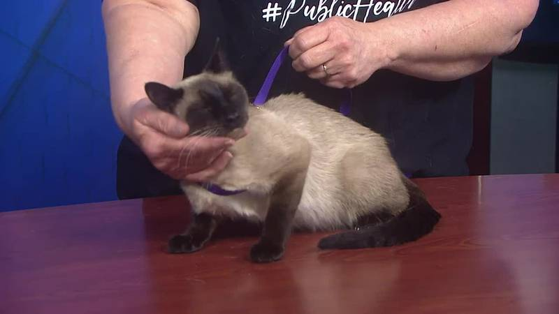 The adoption fee is $40, which covers basic vaccinations as well as flea and tick prevention,...