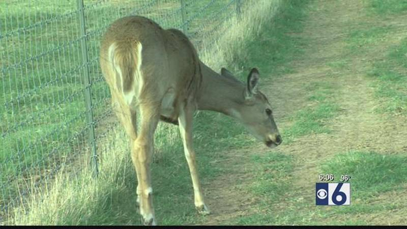 State Farm study shows increased risk of hitting deer this fall