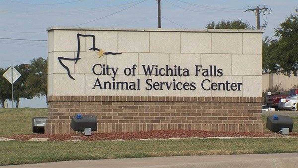 Wichita Falls Animal Services will be waiving adoption fees from Sept. 13 to Sept. 18.